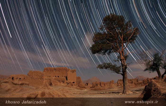 trails_soghad_tree