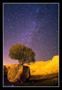 Tree on the Ston ( Arsajnan )