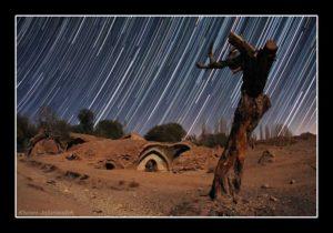 Dawn of life on dry tree ( khosro jafarizadeh )
